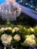 Lesser wedding background.jpg