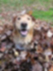 Tilly fall #1.jpg