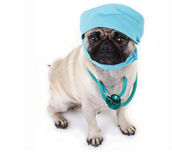 dog in surgery garb.jpg.jpe
