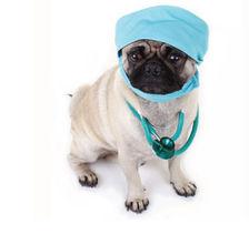 dog in surgery garb.jpg.jpe