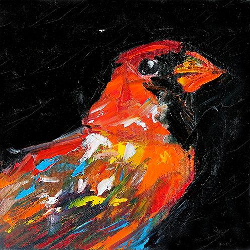 Colorful Cardinal on Black. 8 x 8
