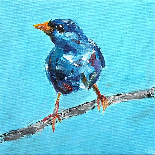 8x8 Blue Finch Standing Tall