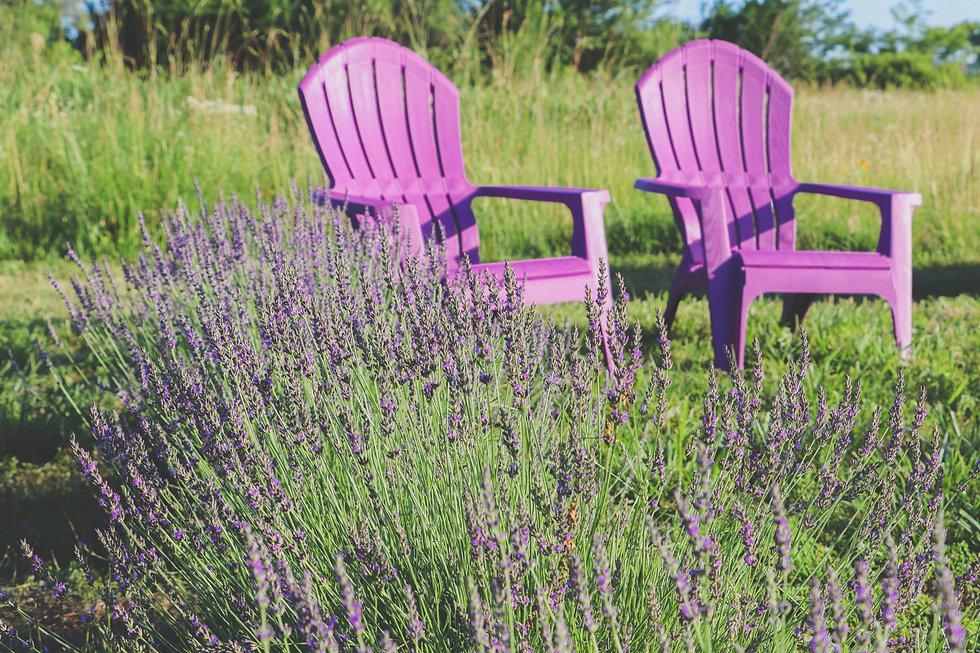 chairs lav-edit.jpg