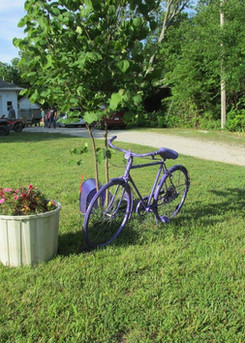 lav bike.jpg