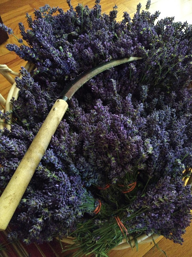 super blue harvest.jpg