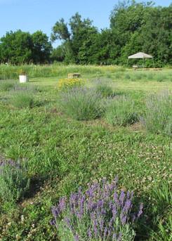 more fields.jpg