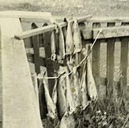1960-008-cauf0702022440.jpg
