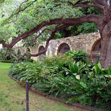 A look at part of the grounds of the Alamo