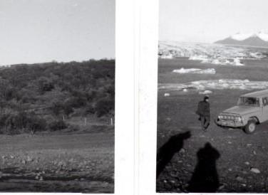 1968-SL-031-trees.jpg