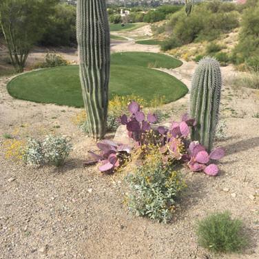 Welcome to Tucson and the Arizona Desert