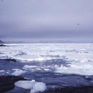 Navy-009-1968-15-ice-flow-2.jpg