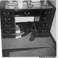 1968-SD-002-Blackie.jpg