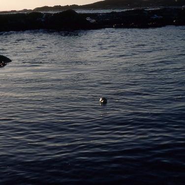Navy-012-navy-seal.jpg