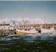 1956-033-hofn-fishing-fleet-in-hofn-harb