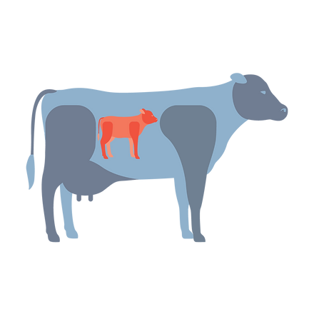 cow_infographic4.png