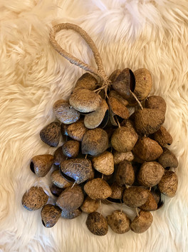 Seeds Bundle