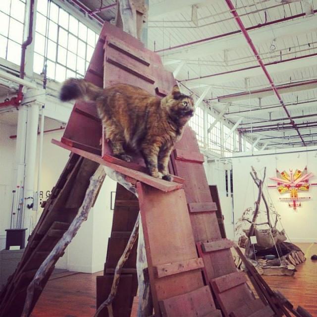 I make giant cat toys