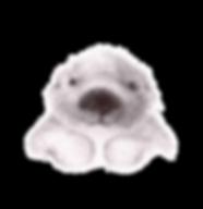 Otter, anouncement card, geboorte kaatje