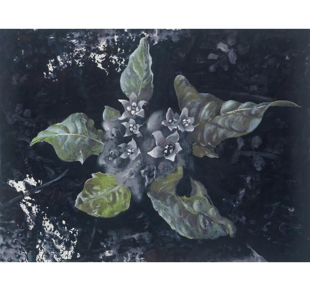 Mandrake/plant, 2002