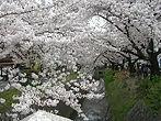 21_Camino de Filosofía, Kioto (2).jpg