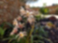 Garden10.jpg