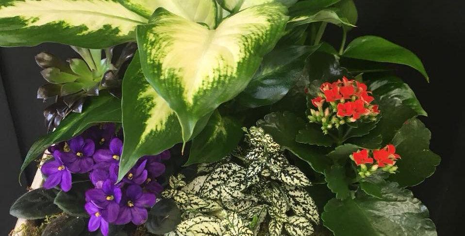 Plant in a fiber glass pot