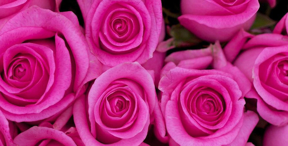 Single Coloured Rose