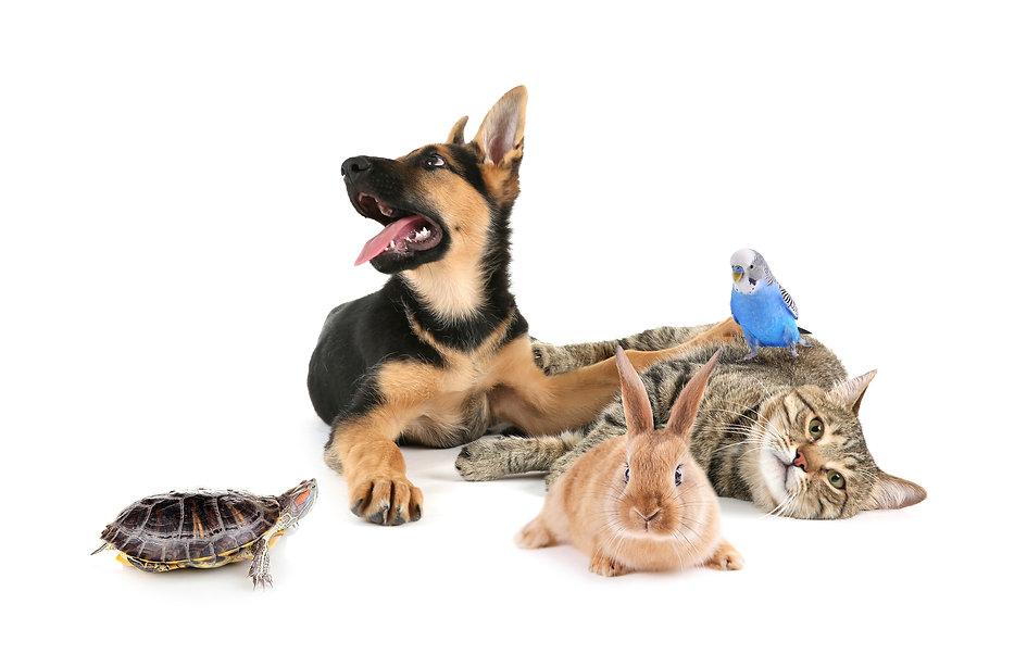 Pet Porter Pals In-Home Pet Care Services