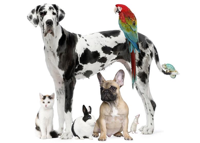 Pet Porter Pals Group of Pets - Dog, Parrot, Reptile, Rabbit, Cat and Rat