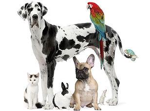 Group Of Pets - Dog,cat, Bird, Reptile,