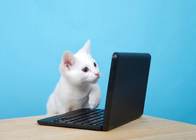 Portrait of one cute white kitten with h