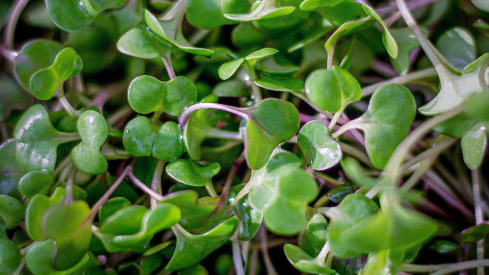 Organic Micro Greens 60g
