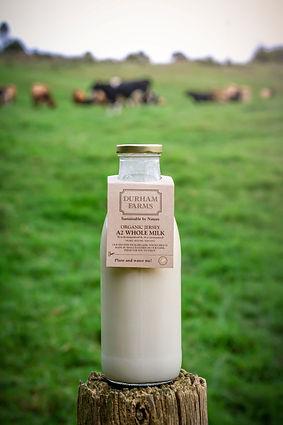 square-milk.jpg
