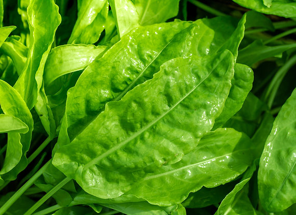 Organic French Sorrel 40g