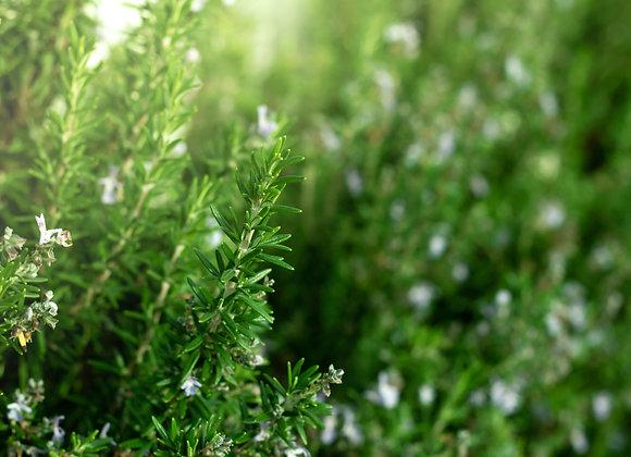 Organic Rosemary 30g