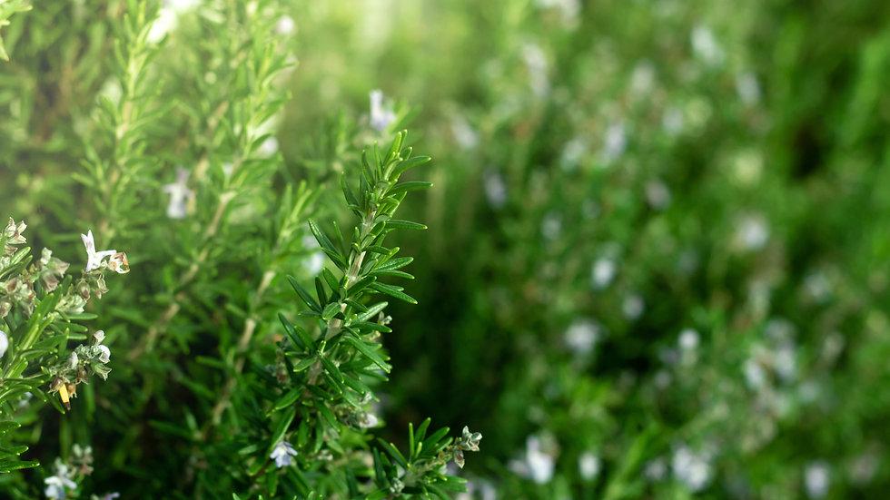 Organic Rosemary 40g