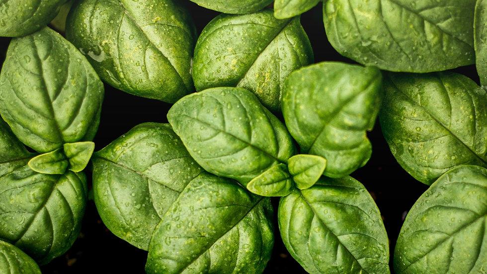 Organic Basil 40g
