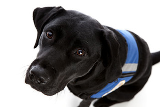 5 Things to Consider Before Getting a Service Dog