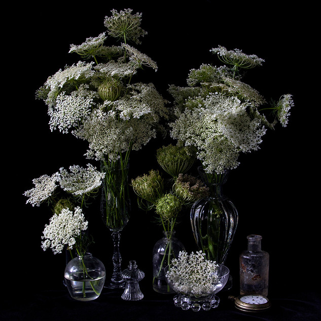 Vanitas with Queen Anne's Lace 9932