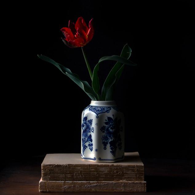 Vanitas with Tulip 0607
