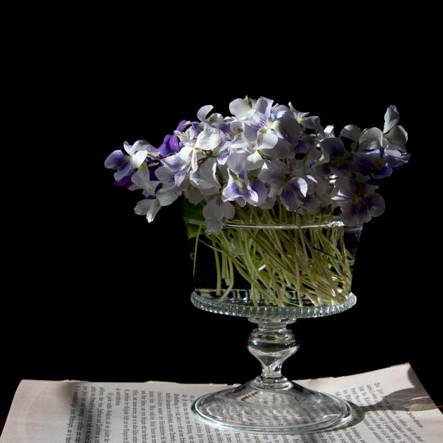 Violets in Vase, 2017