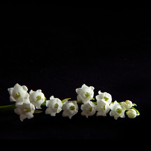 Lily of the Valley_9536