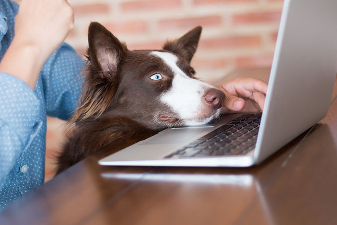 A woman working on her computer at her house with her dog looking at the screen of her lap