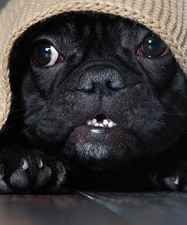 Fearful Dog Tutorials | thinkdog