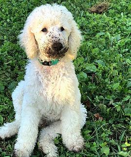Puppy Training Tutorials | thinkdog