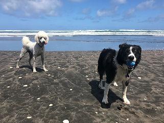 Beach Dogs | thinkdog nz