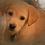 Thumbnail: Pet Oil Portrait