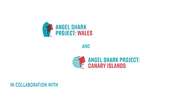 Angel Shark Project.png