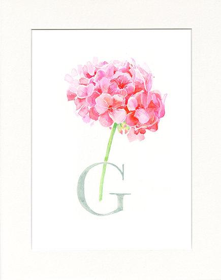 G - Geranium