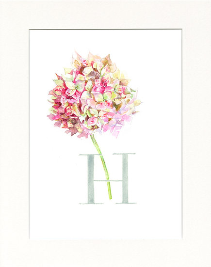 H - Hydrangea